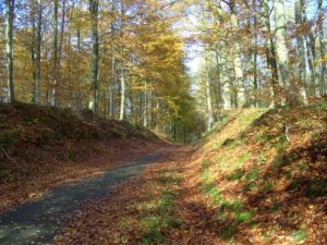 Bois de Colfontaine